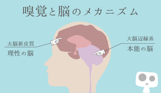 アロマからみる、嗅覚と脳のメカニズム